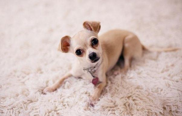 Low-Maintenance Dogs