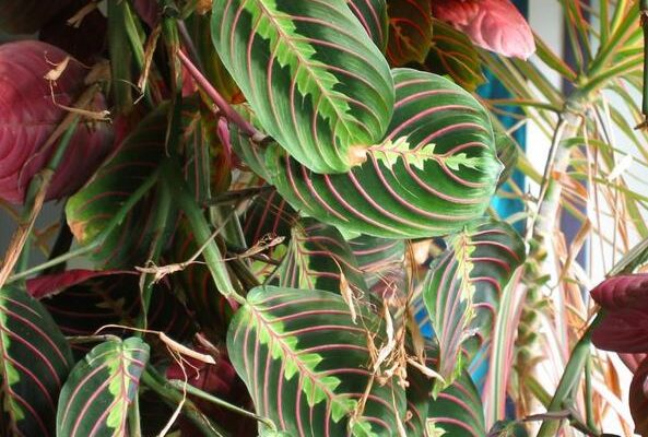 Plants With Beautiful Foliage To Grow In Your Garden and Home