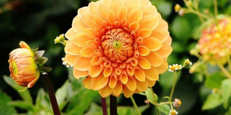 7 Gardening Ideas for Autumn 2021